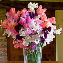 Sweet Pea Sandringham Collection