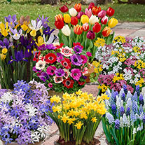 Super Value Spring Bulbs - Buy 150, Get 150 Free!