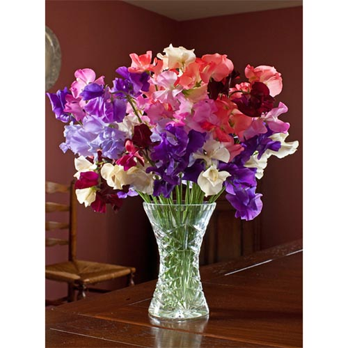Sweet Pea Note Cards