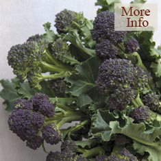 Broccoli Claret