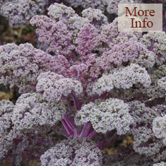 Borecole (Curly Kale) Redbor